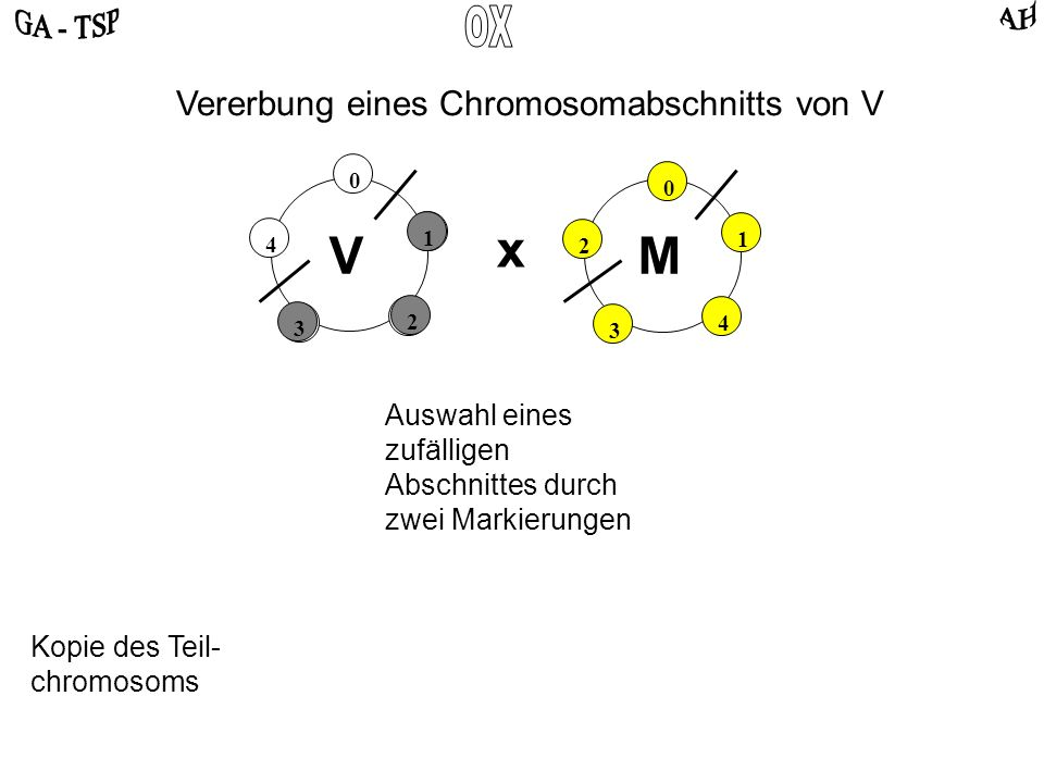 0 2 4 3 1 0 4 2 3 1 VM x Auswahl eines zufälligen Abschnittes durch zwei Markierungen Vererbung eines Chromosomabschnitts von V 1 2 3 Kopie des Teil-