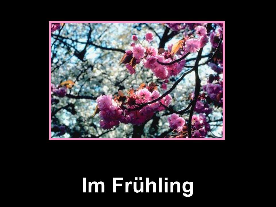 Die Jahreszeiten Frühling Sommer HerbstWinter