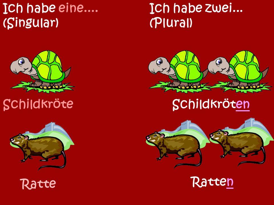 Maus Ich habe eine.... (Singular) Ich habe zwei... (Plural) Mäuse