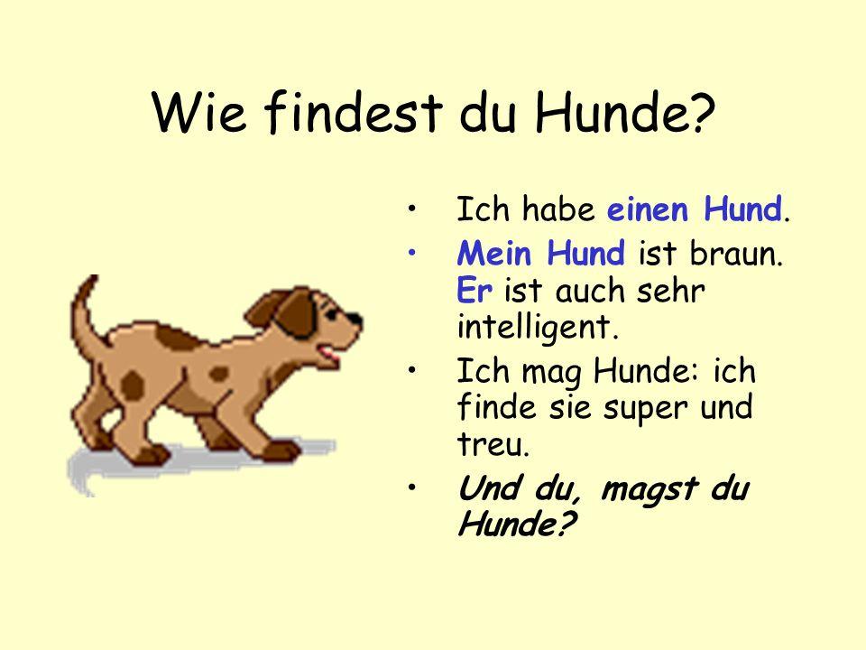 Wie findest du Hunde.Ich habe einen Hund. Mein Hund ist braun.