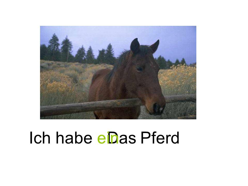 PferdDasIch habe ein