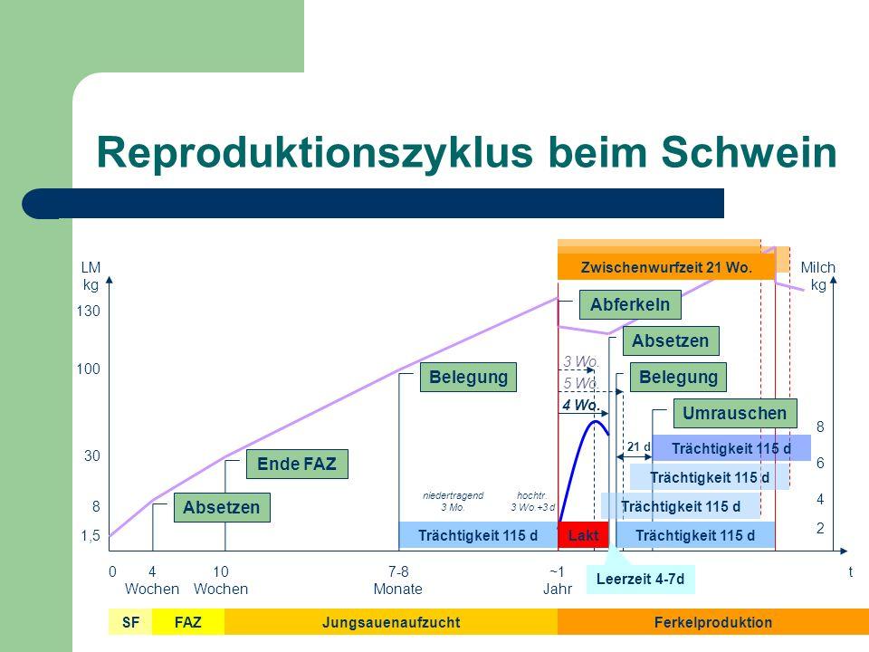Begriffe Zwischenwurfzeit Leertage Säugetage Produktivsauen Remontierungsrate Umrauschen Abferkelrate Anz.