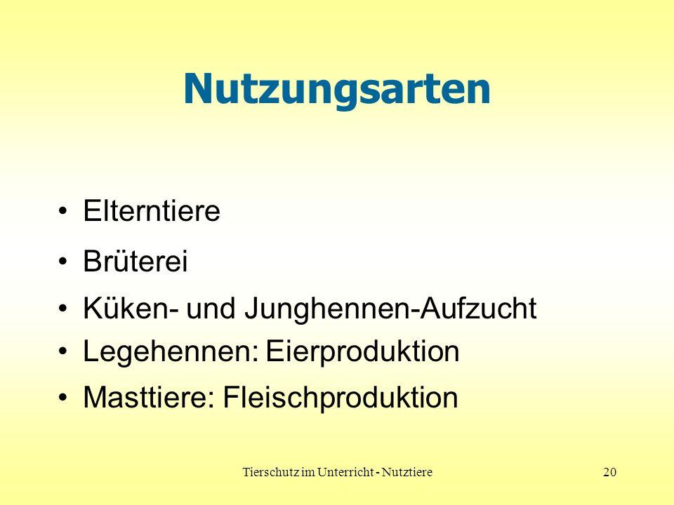 Tierschutz im Unterricht - Nutztiere20 Nutzungsarten Elterntiere Brüterei Küken- und Junghennen-Aufzucht Legehennen: Eierproduktion Masttiere: Fleischproduktion