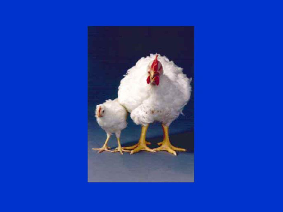 Tierschutz im Unterricht - Nutztiere23
