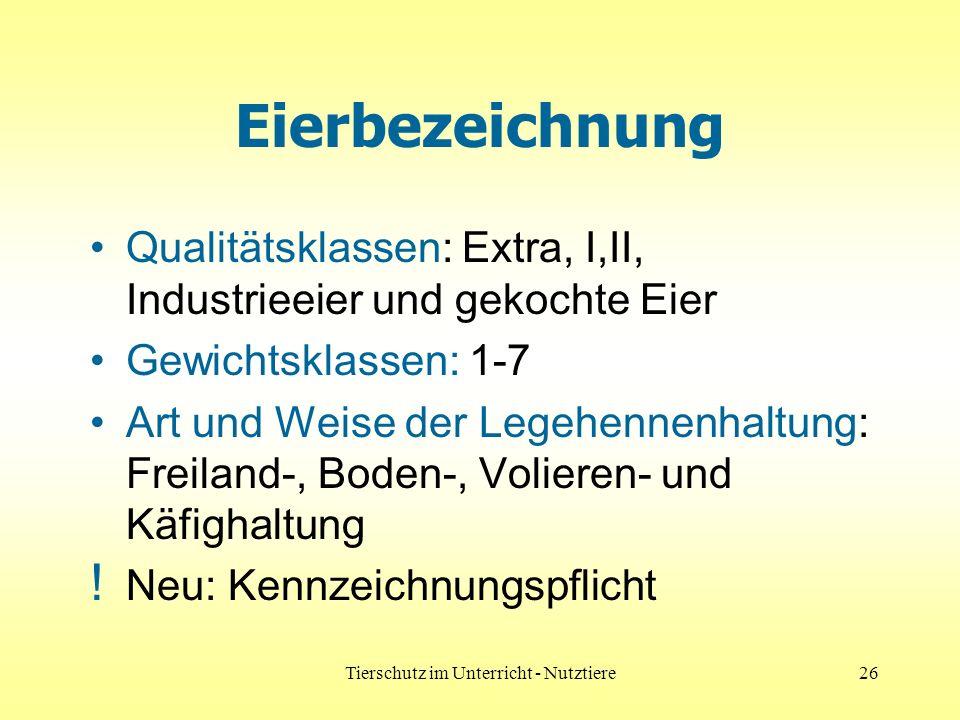 Tierschutz im Unterricht - Nutztiere26 Eierbezeichnung Qualitätsklassen: Extra, I,II, Industrieeier und gekochte Eier Gewichtsklassen: 1-7 Art und Weise der Legehennenhaltung: Freiland-, Boden-, Volieren- und Käfighaltung .