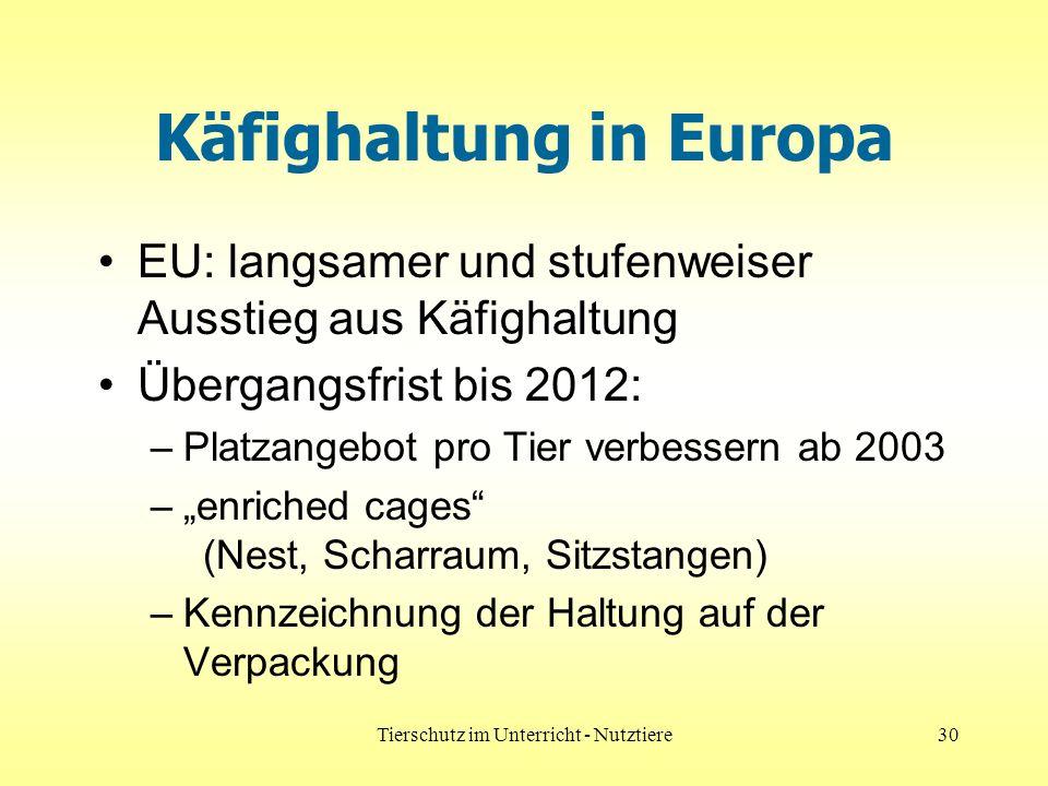 Tierschutz im Unterricht - Nutztiere30 Käfighaltung in Europa EU: langsamer und stufenweiser Ausstieg aus Käfighaltung Übergangsfrist bis 2012: –Platzangebot pro Tier verbessern ab 2003 –enriched cages (Nest, Scharraum, Sitzstangen) –Kennzeichnung der Haltung auf der Verpackung