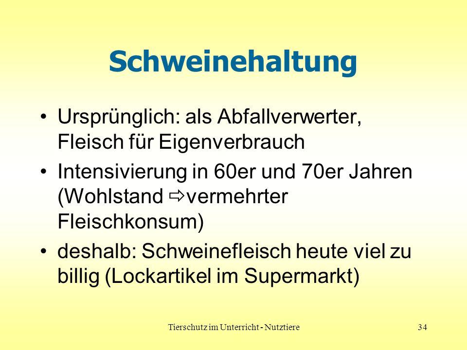 Tierschutz im Unterricht - Nutztiere34 Schweinehaltung Ursprünglich: als Abfallverwerter, Fleisch für Eigenverbrauch Intensivierung in 60er und 70er J