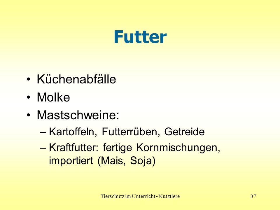 Tierschutz im Unterricht - Nutztiere37 Futter Küchenabfälle Molke Mastschweine: –Kartoffeln, Futterrüben, Getreide –Kraftfutter: fertige Kornmischungen, importiert (Mais, Soja)