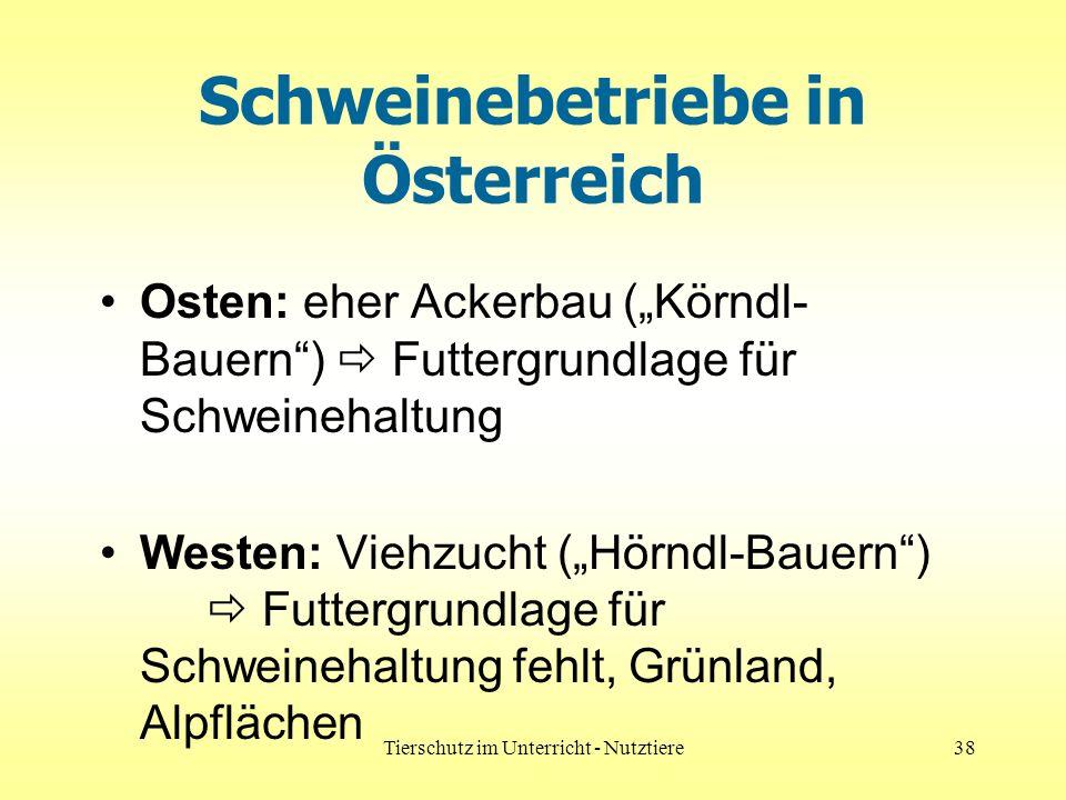 Tierschutz im Unterricht - Nutztiere38 Schweinebetriebe in Österreich Osten: eher Ackerbau (Körndl- Bauern) Futtergrundlage für Schweinehaltung Westen: Viehzucht (Hörndl-Bauern) Futtergrundlage für Schweinehaltung fehlt, Grünland, Alpflächen