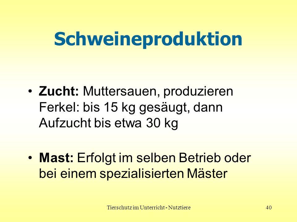 Tierschutz im Unterricht - Nutztiere40 Schweineproduktion Zucht: Muttersauen, produzieren Ferkel: bis 15 kg gesäugt, dann Aufzucht bis etwa 30 kg Mast: Erfolgt im selben Betrieb oder bei einem spezialisierten Mäster
