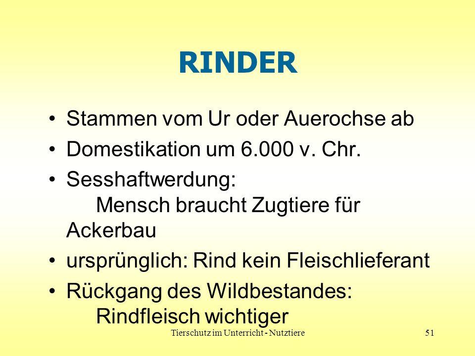 Tierschutz im Unterricht - Nutztiere51 RINDER Stammen vom Ur oder Auerochse ab Domestikation um 6.000 v.