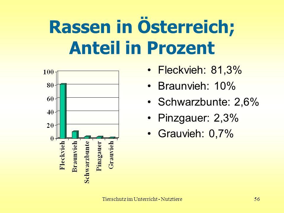Tierschutz im Unterricht - Nutztiere56 Rassen in Österreich; Anteil in Prozent Fleckvieh: 81,3% Braunvieh: 10% Schwarzbunte: 2,6% Pinzgauer: 2,3% Grauvieh: 0,7%