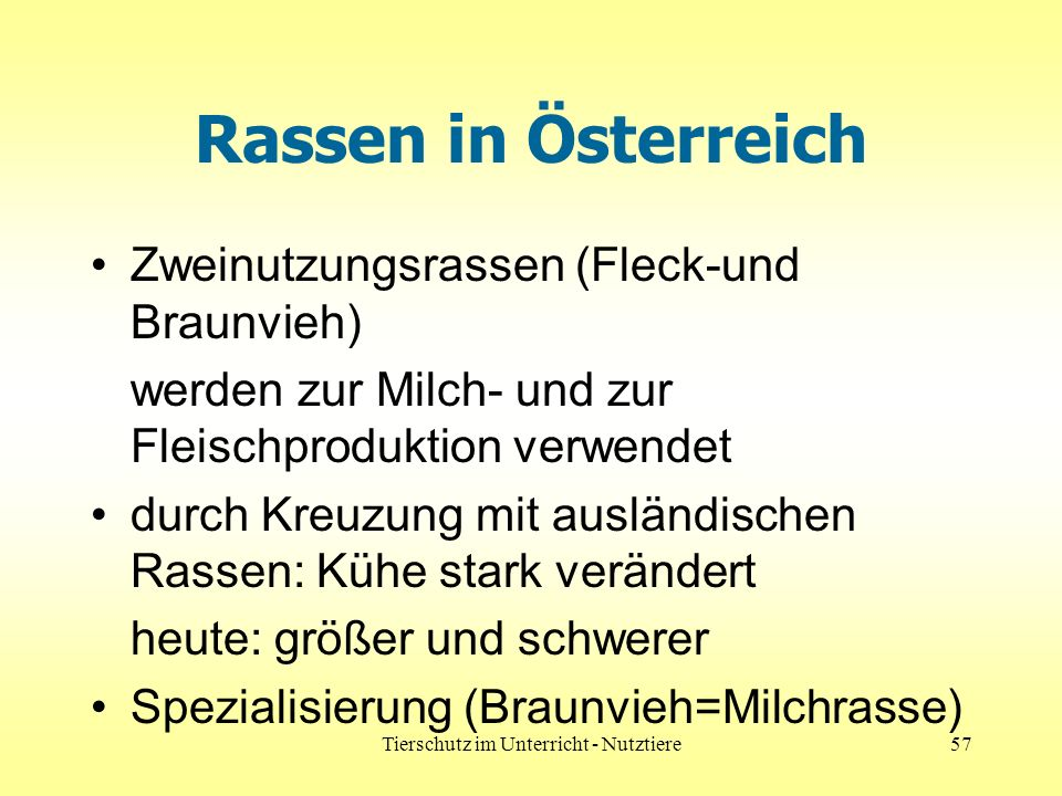 Tierschutz im Unterricht - Nutztiere57 Rassen in Österreich Zweinutzungsrassen (Fleck-und Braunvieh) werden zur Milch- und zur Fleischproduktion verwendet durch Kreuzung mit ausländischen Rassen: Kühe stark verändert heute: größer und schwerer Spezialisierung (Braunvieh=Milchrasse)