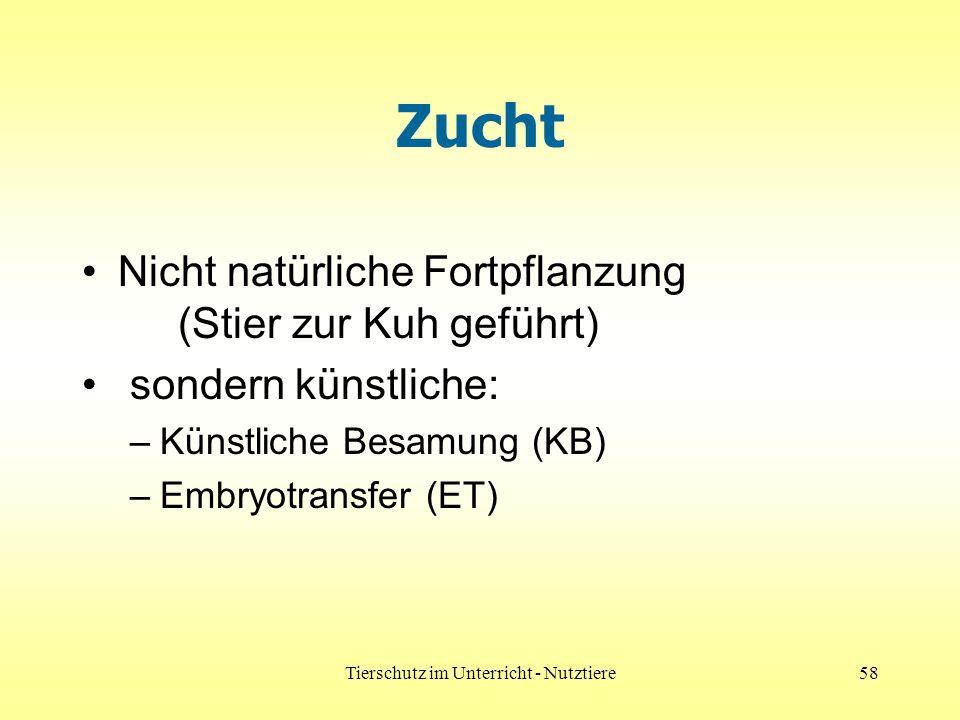 Tierschutz im Unterricht - Nutztiere58 Zucht Nicht natürliche Fortpflanzung (Stier zur Kuh geführt) sondern künstliche: –Künstliche Besamung (KB) –Embryotransfer (ET)
