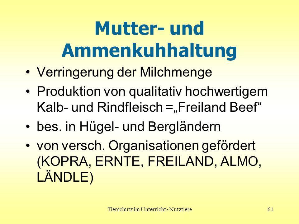 Tierschutz im Unterricht - Nutztiere61 Mutter- und Ammenkuhhaltung Verringerung der Milchmenge Produktion von qualitativ hochwertigem Kalb- und Rindfleisch =Freiland Beef bes.