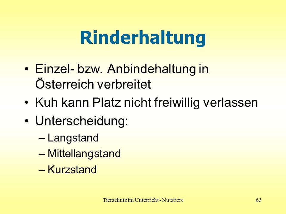 Tierschutz im Unterricht - Nutztiere63 Rinderhaltung Einzel- bzw. Anbindehaltung in Österreich verbreitet Kuh kann Platz nicht freiwillig verlassen Un