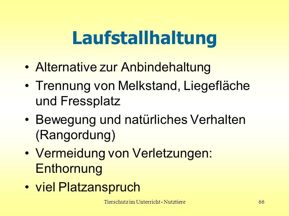 Tierschutz im Unterricht - Nutztiere66 Laufstallhaltung Alternative zur Anbindehaltung Trennung von Melkstand, Liegefläche und Fressplatz Bewegung und