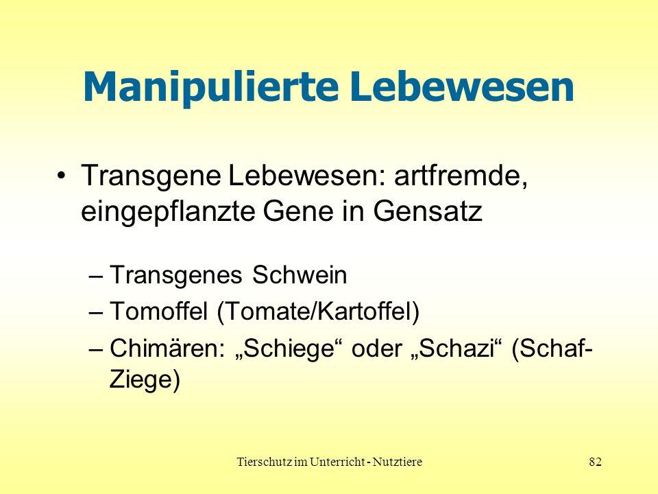 Tierschutz im Unterricht - Nutztiere82 Manipulierte Lebewesen Transgene Lebewesen: artfremde, eingepflanzte Gene in Gensatz –Transgenes Schwein –Tomof