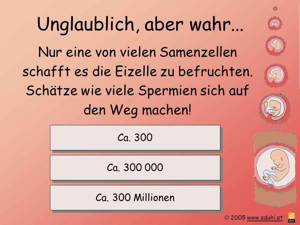 © 2005 www.eduhi.atwww.eduhi.at Unglaublich, aber wahr... Nur eine von vielen Samenzellen schafft es die Eizelle zu befruchten. Schätze wie viele Sper