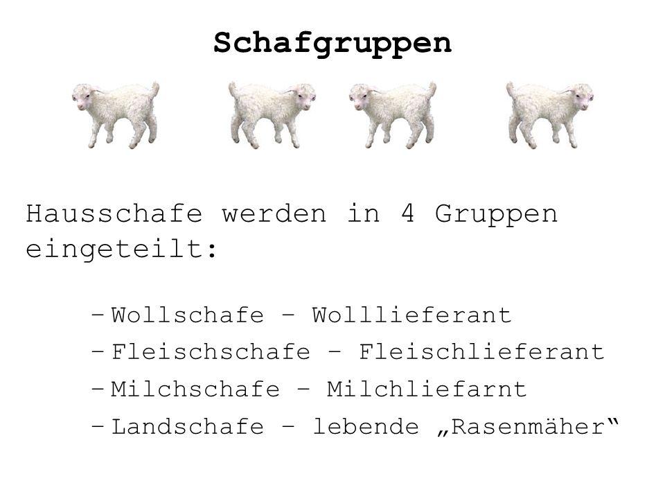 Hausschafe werden in 4 Gruppen eingeteilt: –Wollschafe – Wolllieferant –Fleischschafe – Fleischlieferant –Milchschafe – Milchliefarnt –Landschafe – le