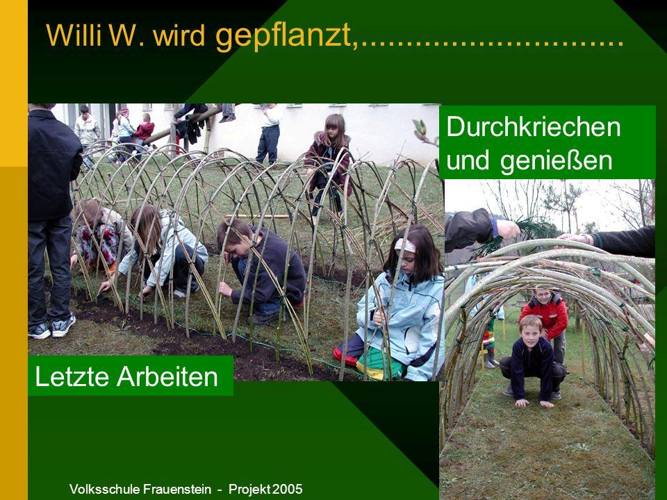 Volksschule Frauenstein - Projekt 2005 Willi W.wird gepflanzt,.............................
