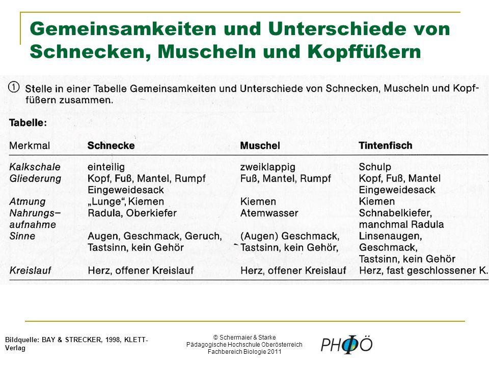 © Schermaier & Starke Pädagogische Hochschule Oberösterreich Fachbereich Biologie 2011 Gemeinsamkeiten und Unterschiede von Schnecken, Muscheln und Kopffüßern Bildquelle: BAY & STRECKER, 1998, KLETT- Verlag
