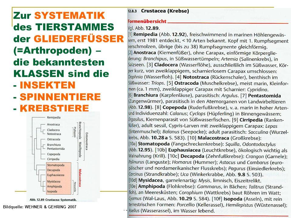 © Schermaier & Starke Pädagogische Hochschule Oberösterreich Fachbereich Biologie 2011 Zur SYSTEMATIK des TIERSTAMMES der GLIEDERFÜSSER (=Arthropoden) – die bekanntesten KLASSEN sind die - INSEKTEN - SPINNENTIERE - KREBSTIERE Bildquelle: WEHNER & GEHRING 2007
