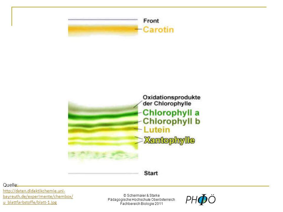 © Schermaier & Starke Pädagogische Hochschule Oberösterreich Fachbereich Biologie 2011 Quelle: http://daten.didaktikchemie.uni- bayreuth.de/experimente/chembox/ u_blattfarbstoffe/blatt-1.jpg http://daten.didaktikchemie.uni- bayreuth.de/experimente/chembox/ u_blattfarbstoffe/blatt-1.jpg