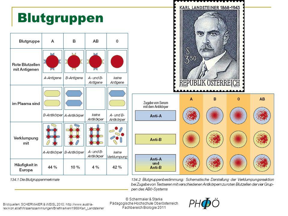 © Schermaier & Starke Pädagogische Hochschule Oberösterreich Fachbereich Biologie 2011 Blutgruppen Bildquellen: SCHERMAIER & WEISL 2010; http://www.austria- lexikon.at/af/Wissenssammlungen/Briefmarken/1968/Karl_Landsteiner