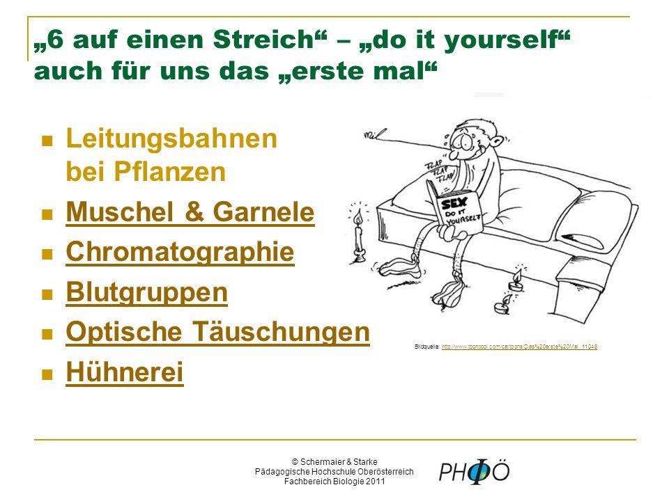 © Schermaier & Starke Pädagogische Hochschule Oberösterreich Fachbereich Biologie 2011 Quelle: http://upload.wikimedia.org/wikipedia/commons/thum b/4/45/Straightlines.svg/600px-Straightlines.svg.png http://upload.wikimedia.org/wikipedia/commons/thum b/4/45/Straightlines.svg/600px-Straightlines.svg.png