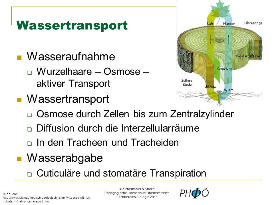 © Schermaier & Starke Pädagogische Hochschule Oberösterreich Fachbereich Biologie 2011 Quelle: http://ohg- landau.de/ohg/biolk/images/oekologie/4wurzel2.jpghttp://ohg- landau.de/ohg/biolk/images/oekologie/4wurzel2.jpg