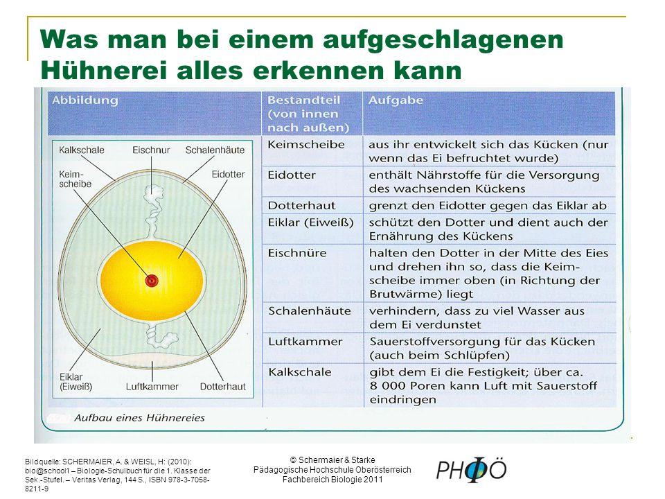 © Schermaier & Starke Pädagogische Hochschule Oberösterreich Fachbereich Biologie 2011 Was man bei einem aufgeschlagenen Hühnerei alles erkennen kann Bildquelle: SCHERMAIER, A.