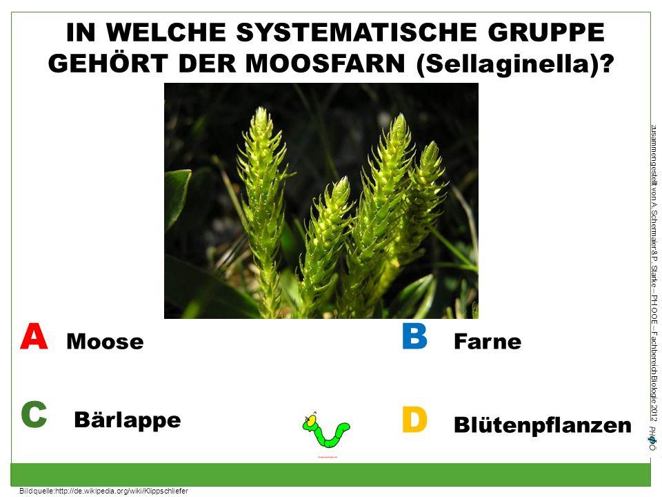zusammengestellt von A. Schermaier & P. Starke – PH OOE – Fachbereich Biologie 2012 IN WELCHE SYSTEMATISCHE GRUPPE GEHÖRT DER MOOSFARN (Sellaginella)?