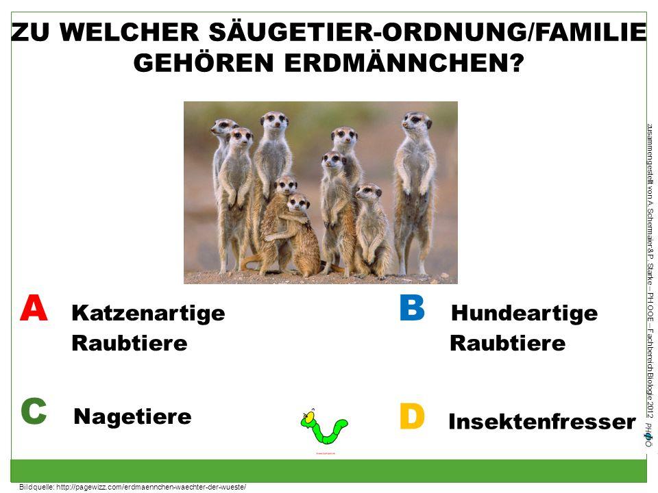 zusammengestellt von A. Schermaier & P. Starke – PH OOE – Fachbereich Biologie 2012 ZU WELCHER SÄUGETIER-ORDNUNG/FAMILIE GEHÖREN ERDMÄNNCHEN? A Katzen
