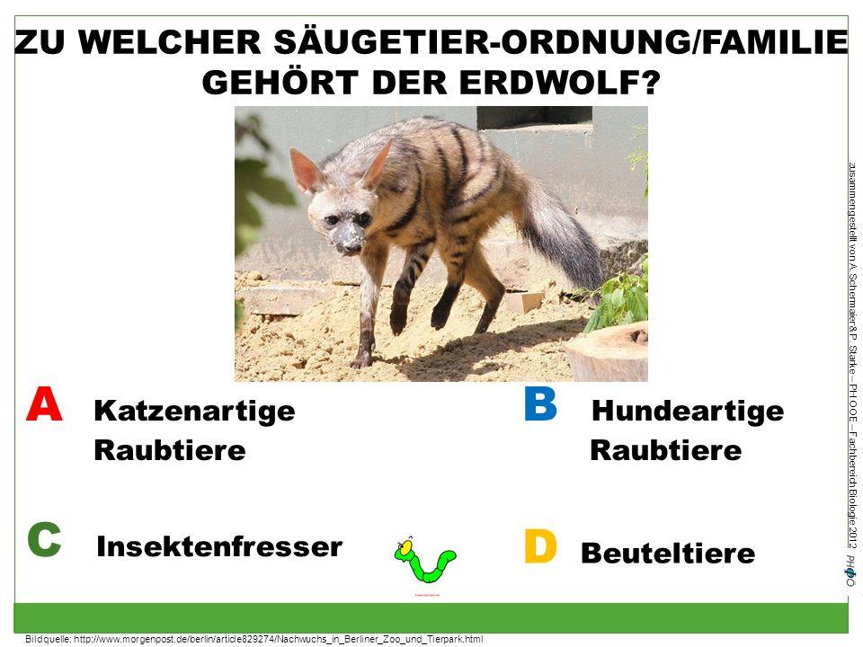 zusammengestellt von A. Schermaier & P. Starke – PH OOE – Fachbereich Biologie 2012 ZU WELCHER SÄUGETIER-ORDNUNG/FAMILIE GEHÖRT DER ERDWOLF? A Katzena