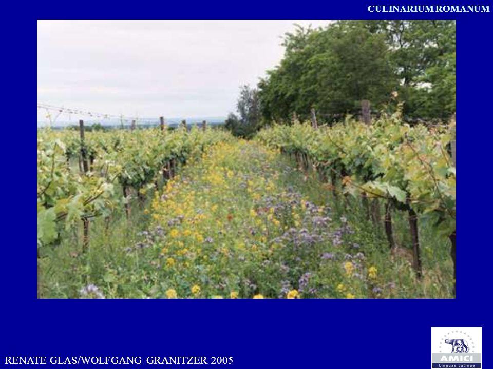 RENATE GLAS/WOLFGANG GRANITZER 2005 CULINARIUM ROMANUM vitis prostrata