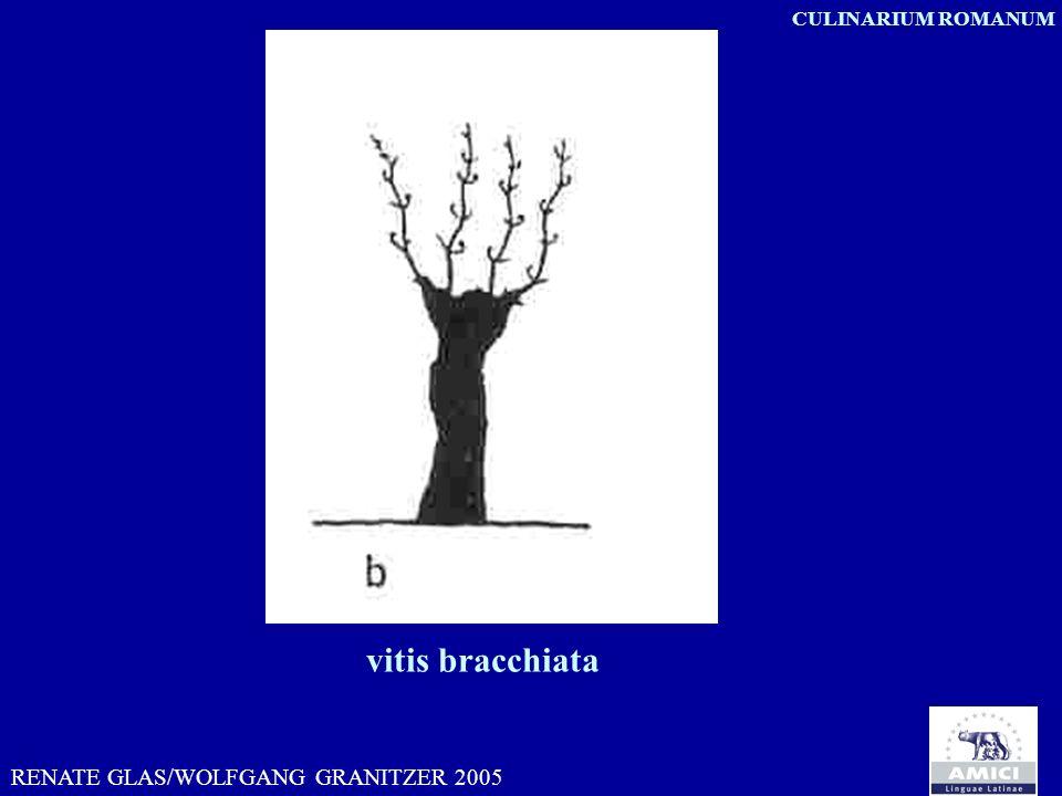 RENATE GLAS/WOLFGANG GRANITZER 2005 CULINARIUM ROMANUM vitis bracchiata
