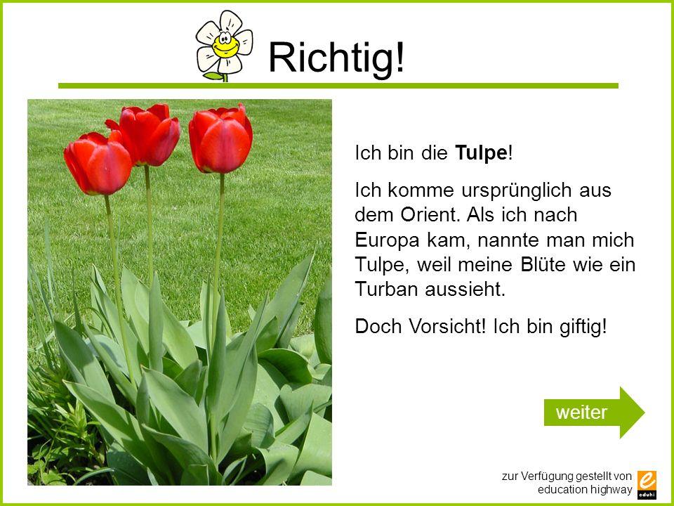 zur Verfügung gestellt von education highway Richtig! Ich bin die Tulpe! Ich komme ursprünglich aus dem Orient. Als ich nach Europa kam, nannte man mi