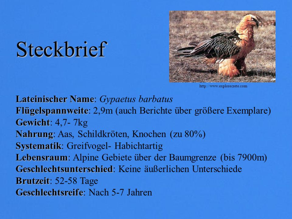 Lateinischer Name Lateinischer Name: Gypaetus barbatus Flügelspannweite Flügelspannweite: 2,9m (auch Berichte über größere Exemplare) Gewicht Gewicht: