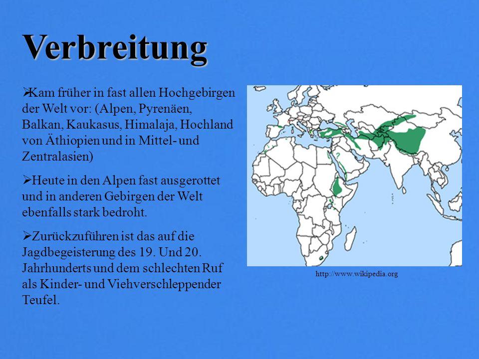 Verbreitung Kam früher in fast allen Hochgebirgen der Welt vor: (Alpen, Pyrenäen, Balkan, Kaukasus, Himalaja, Hochland von Äthiopien und in Mittel- un