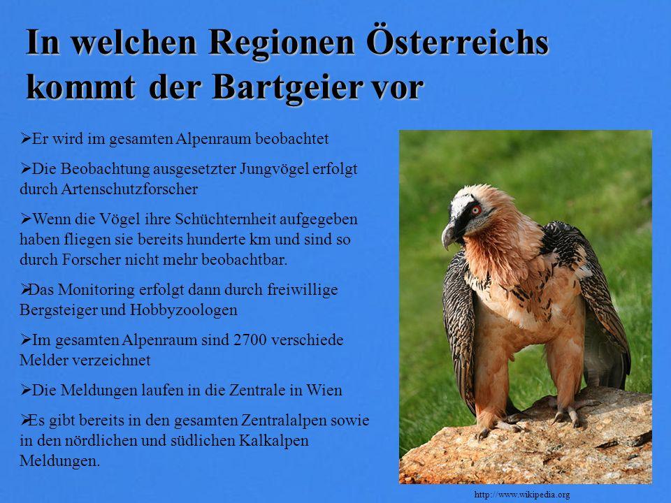 In welchen Regionen Österreichs kommt der Bartgeier vor Er wird im gesamten Alpenraum beobachtet Die Beobachtung ausgesetzter Jungvögel erfolgt durch