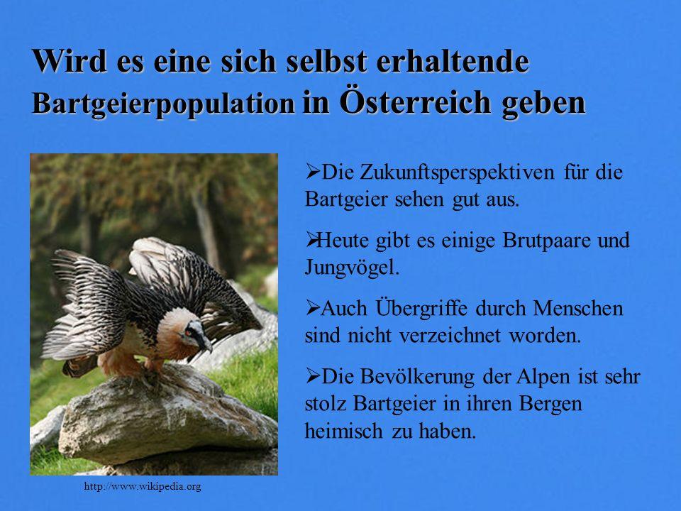 Wird es eine sich selbst erhaltende Bartgeierpopulation in Österreich geben Die Zukunftsperspektiven für die Bartgeier sehen gut aus. Heute gibt es ei