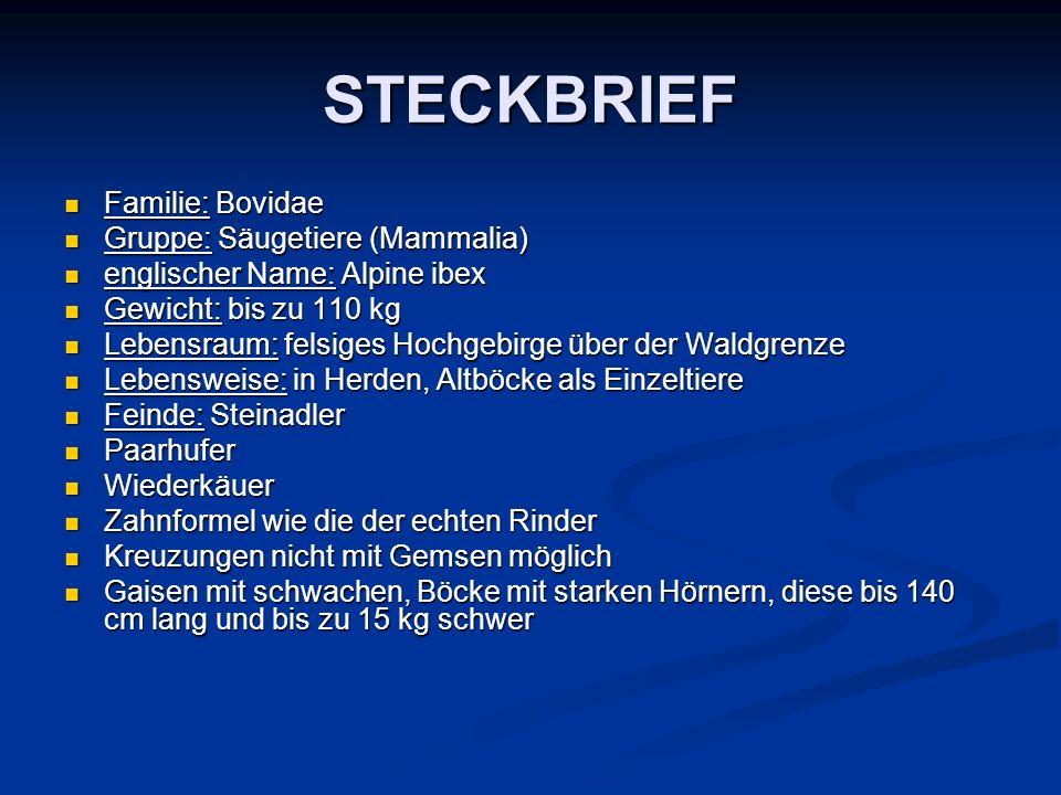 STECKBRIEF Familie: Bovidae Familie: Bovidae Gruppe: Säugetiere (Mammalia) Gruppe: Säugetiere (Mammalia) englischer Name: Alpine ibex englischer Name: