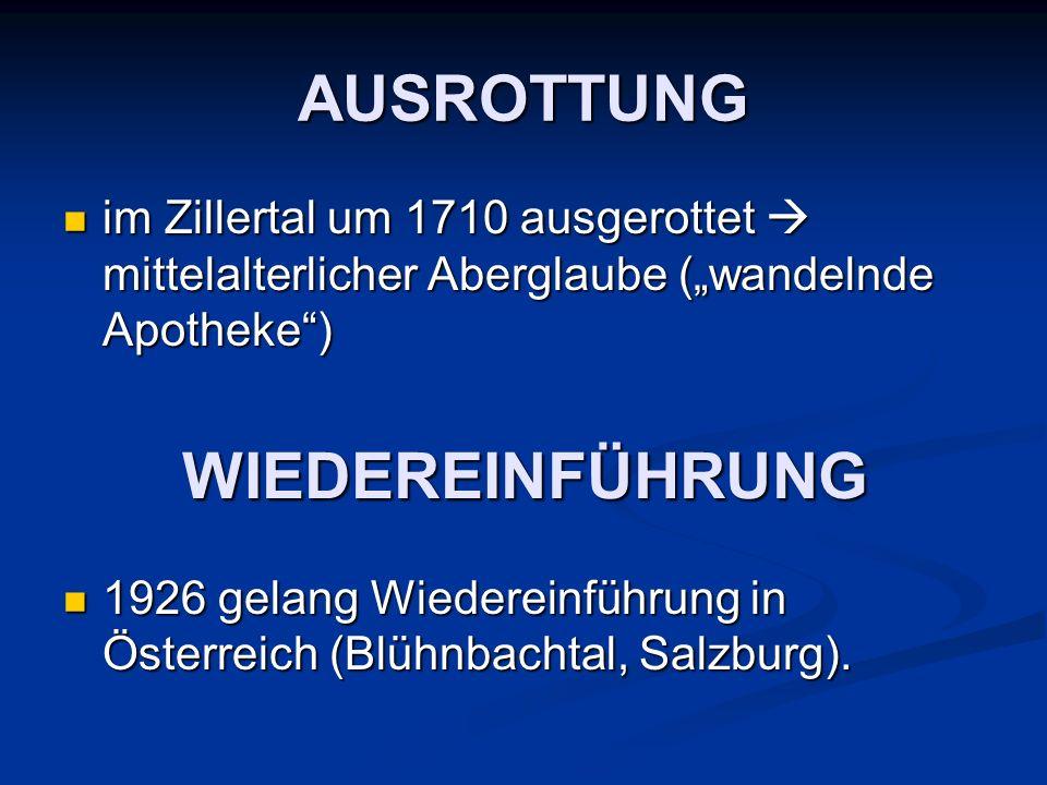 AUSROTTUNG im Zillertal um 1710 ausgerottet mittelalterlicher Aberglaube (wandelnde Apotheke) im Zillertal um 1710 ausgerottet mittelalterlicher Aberg