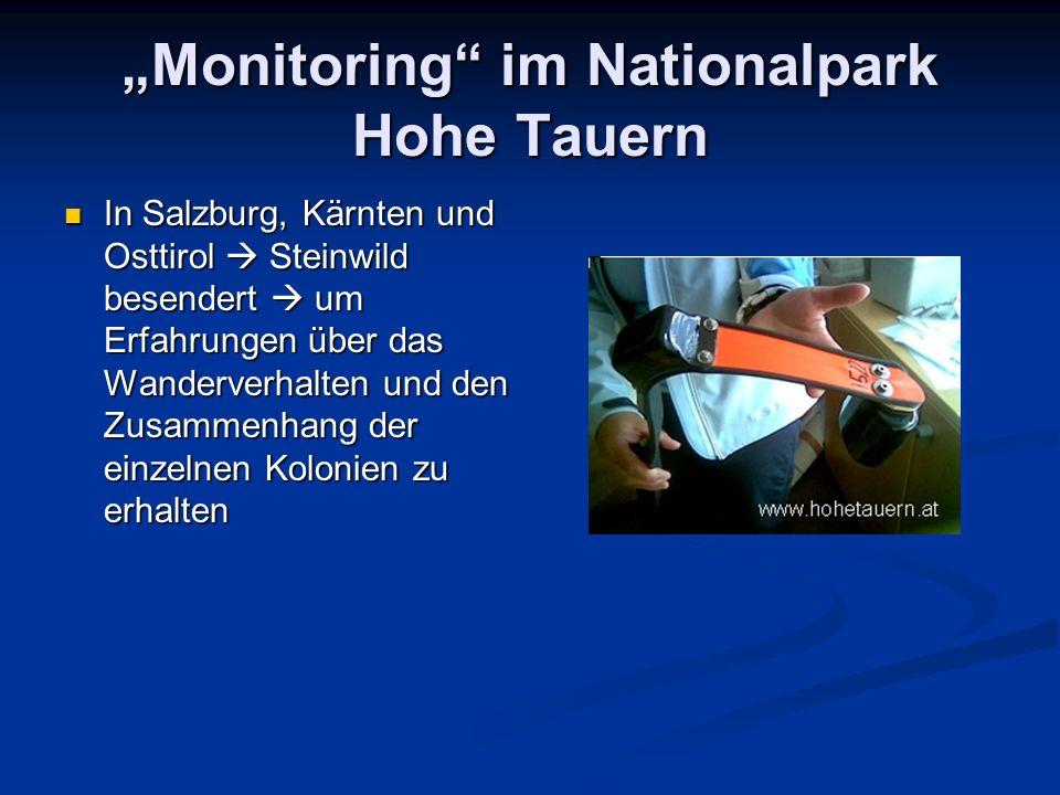 Monitoring im Nationalpark Hohe Tauern In Salzburg, Kärnten und Osttirol Steinwild besendert um Erfahrungen über das Wanderverhalten und den Zusammenh