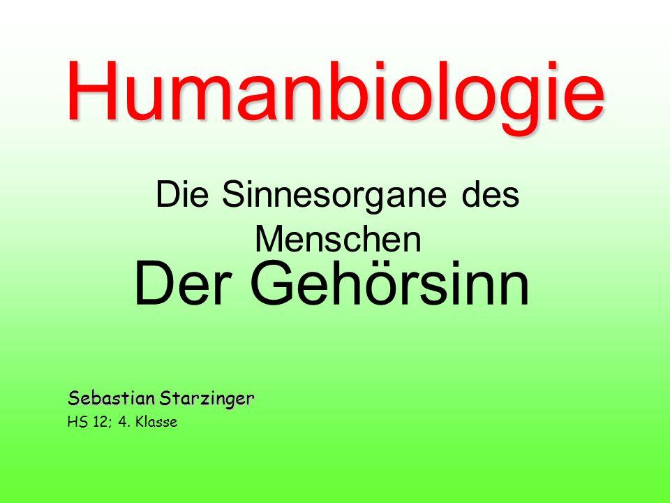 Humanbiologie Die Sinnesorgane des Menschen Der Gehörsinn Sebastian Starzinger HS 12; 4. Klasse