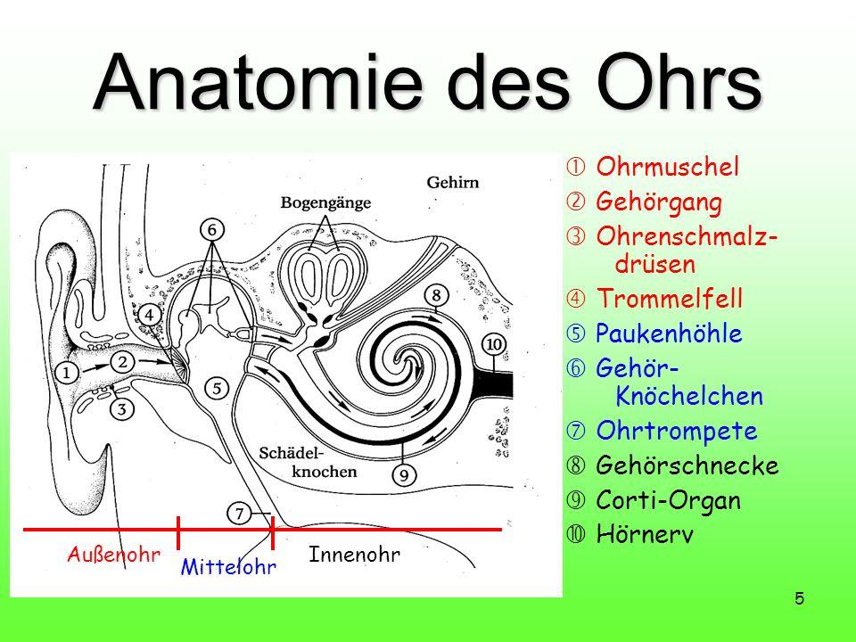 5 Anatomie des Ohrs Ohrmuschel Gehörgang Ohrenschmalz- drüsen Trommelfell Paukenhöhle Gehör- Knöchelchen Ohrtrompete Gehörschnecke Corti-Organ Hörnerv