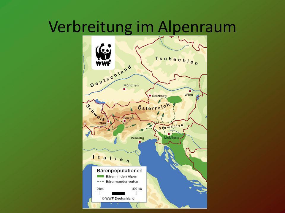 Situation in Österreich Geschätzte Populationsgröße : 8 – 14 Individuen Verfügbares Habitat : 20 – 25.000 km² Zukunftsaussichten : schlecht Indikator : 100 – 400 Bären Vorkommen in Österreich : Region der Alpen
