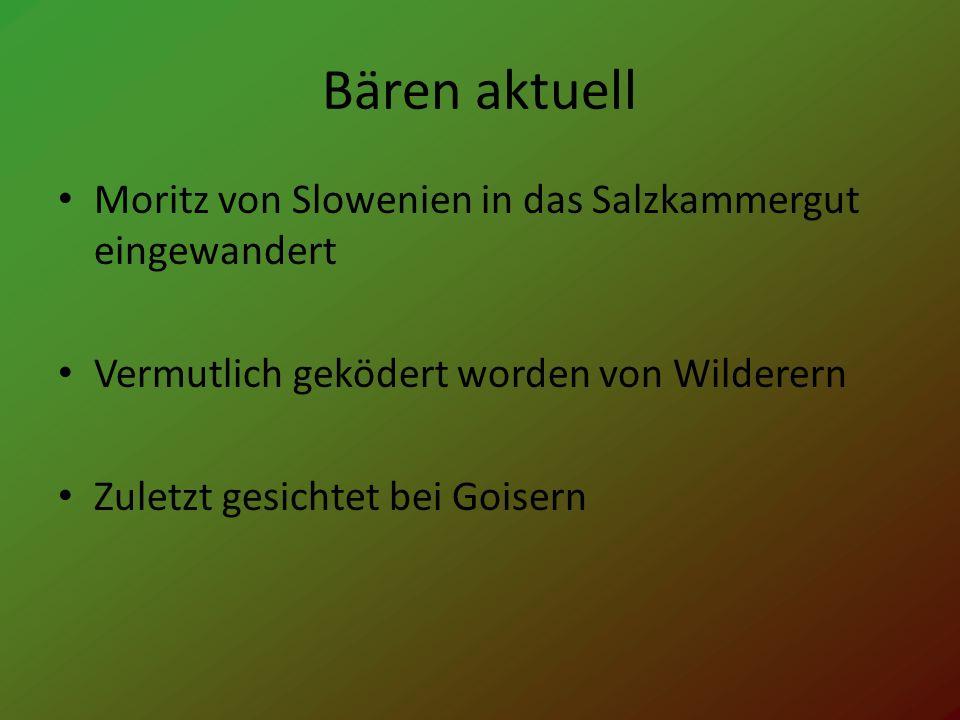 Bären aktuell Moritz von Slowenien in das Salzkammergut eingewandert Vermutlich geködert worden von Wilderern Zuletzt gesichtet bei Goisern