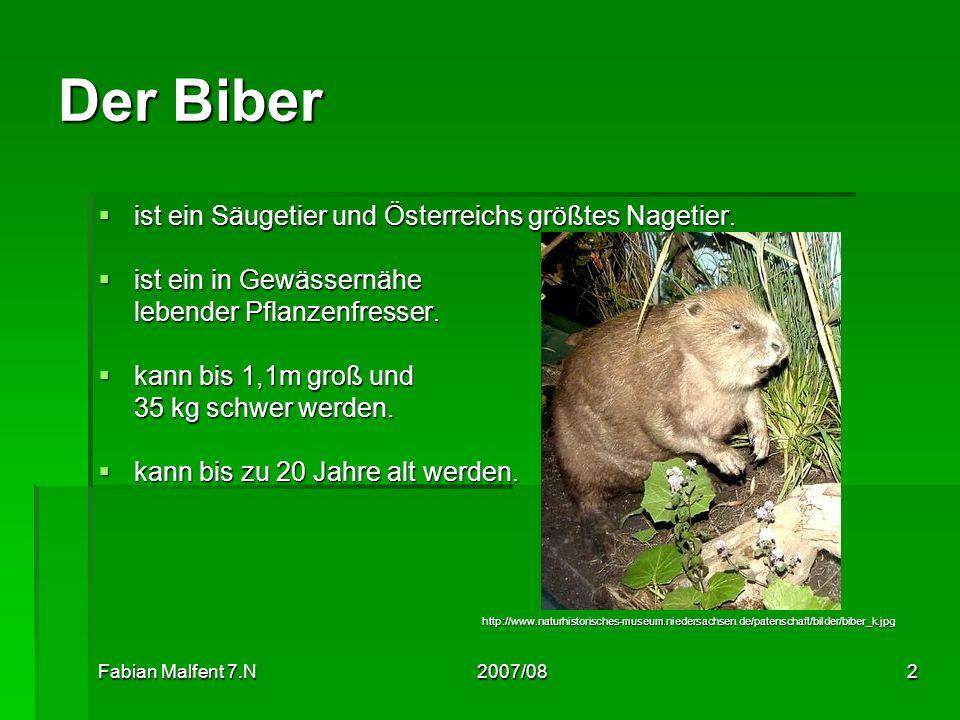Fabian Malfent 7.N2007/082 Der Biber ist ein Säugetier und Österreichs größtes Nagetier. ist ein Säugetier und Österreichs größtes Nagetier. ist ein i